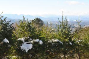 Winter Wonderland: Snow in the Mountains