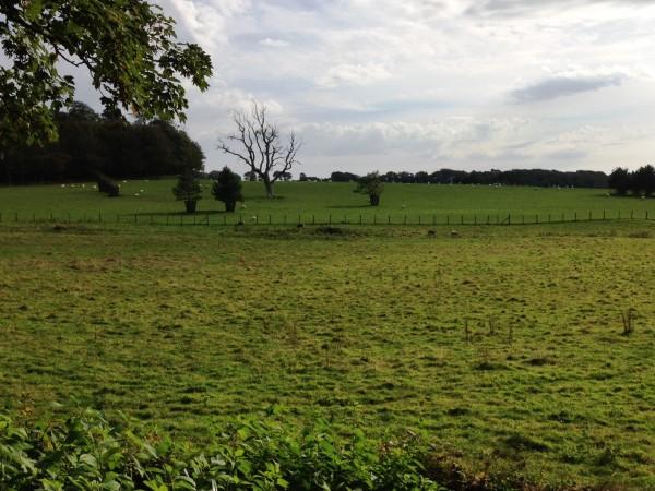 surprise...pastureland with grazing animals