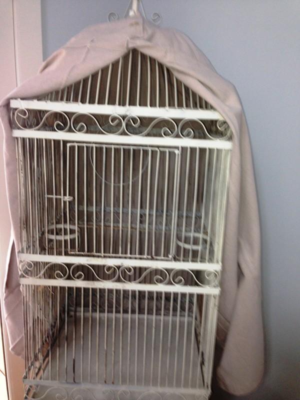 raleigh interior design, birdcage