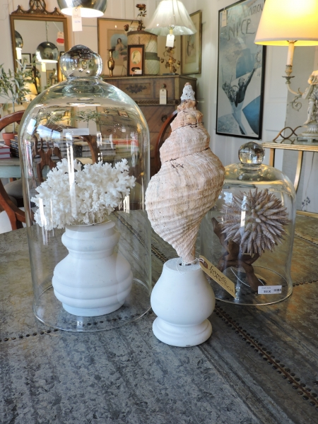 Coral, Shell Items, and Cloches