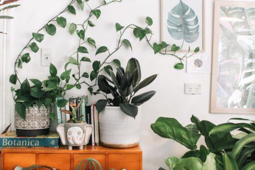 modern house plants white walls