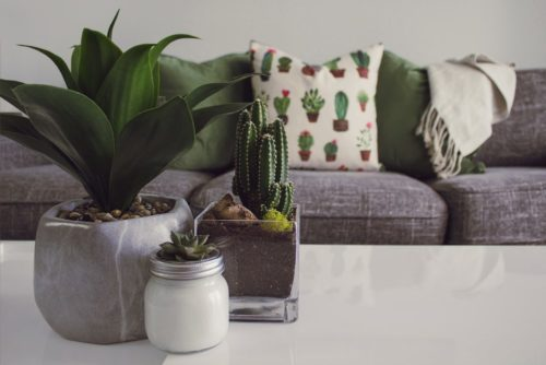 cactus pillow decorating with nature