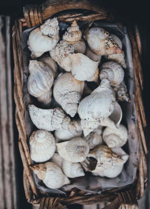shells in basket