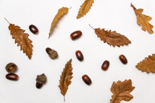 Fall decor ideas leaves and acorns