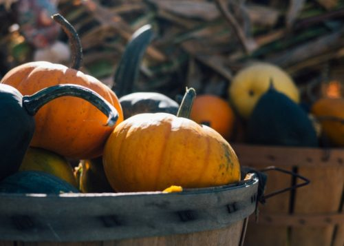 fall orange pumpkins in basket